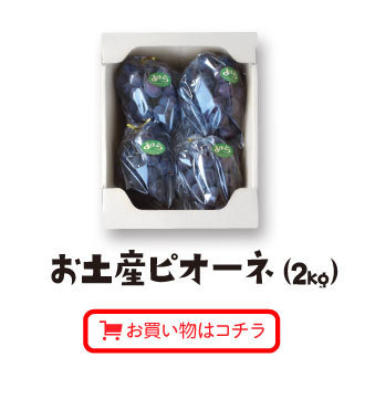 お土産ピオーネ(2kg)お買い物はコチラ