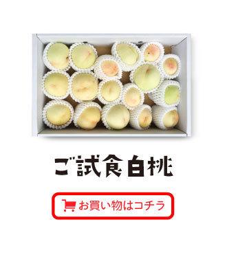 ご試食白桃お買い物はコチラ