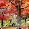 ウッドパーク声ヶ乢の紅葉