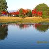 衆楽園の紅葉(2010年11月)
