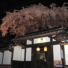 千光寺近くのお宅の枝垂桜