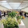 洋ラン展が津山文化センターでありました。