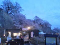 夜桜が綺麗です。そして賑わっています。まだ、楽しめますが、少し散り始めたさくらもありました。