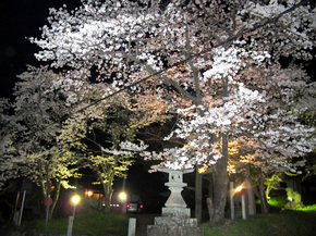 shirakami3.jpg