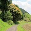 鏡野の七色樫の木に会ってきました。