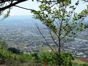 shinai3.jpg