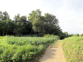 道木山.jpg