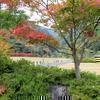 2012年津川ダムの紅葉が見ごろを迎えます。