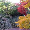 2012年11月14日の鶴山公園のモミジです。