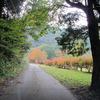 2012年黒木ダム周辺の紅葉です。