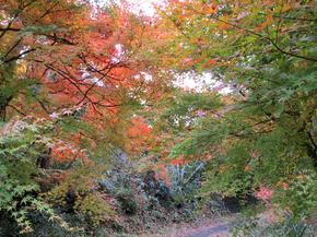 satoyama19.jpg