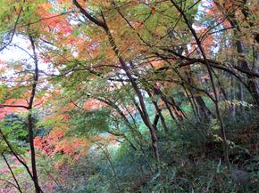 satoyama4.jpg