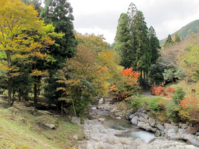 tsugawa19.jpg