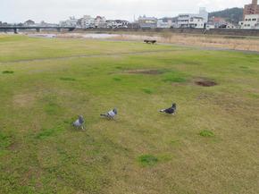 yoshiigawa.jpg