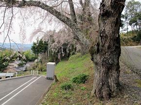 honzanji1.jpg