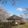2013年神楽尾公園のさくら