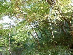 satoyama03.jpg