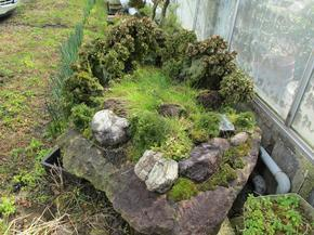 岩松2.jpg