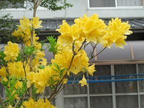 kitsutsuji5.jpg