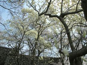kobu3.jpg