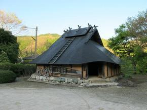koshiwata14.jpg