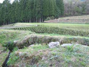 koshiwata17.jpg