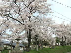 sirakami35.jpg