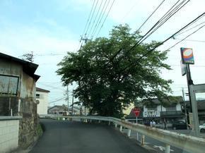 inabakaidou1.jpg