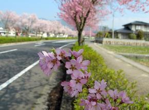 higashi13.jpg