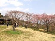 kagurao5.jpg