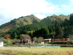 chiwa1.jpg