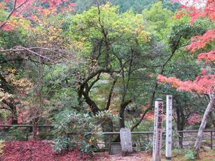 kagamino-10.jpg