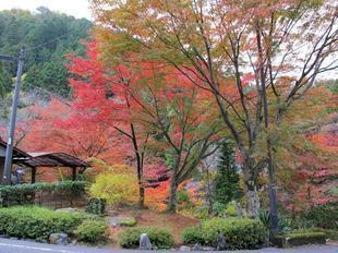 kagamino-19.jpg
