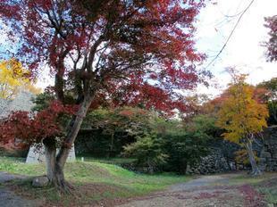 鶴山紅葉3.jpg