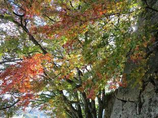 鶴山紅葉32.jpg