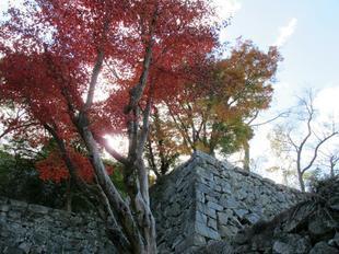鶴山紅葉7.jpg
