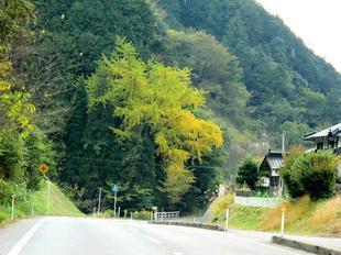 chiwa3.jpg
