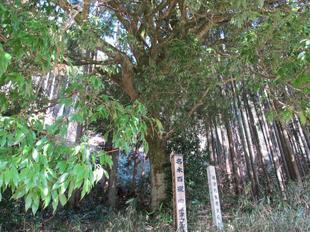 nanairo7.jpg