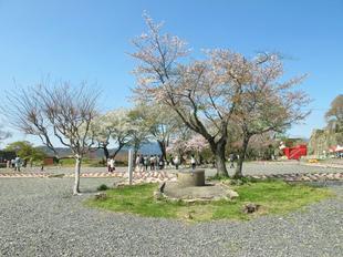 sakuramatsuri18.jpg