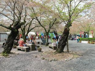 sakuramatsuri2.jpg