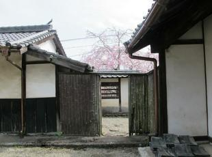 tateishi_4-6-18.jpg