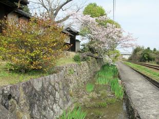 tateishi_4-6-37.jpg