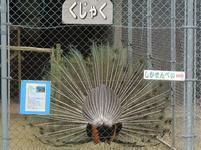 ueyama54.jpg