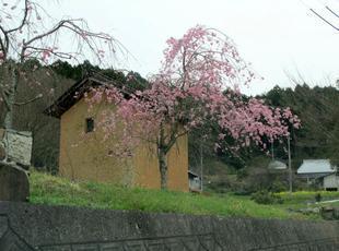ueyama60.jpg