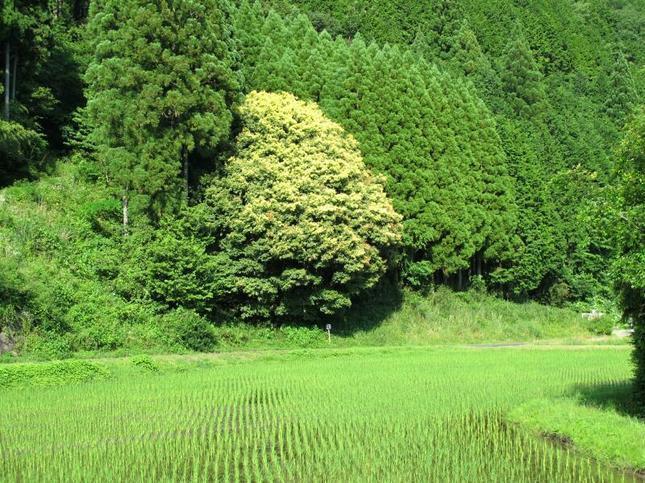 nanairo8.jpg