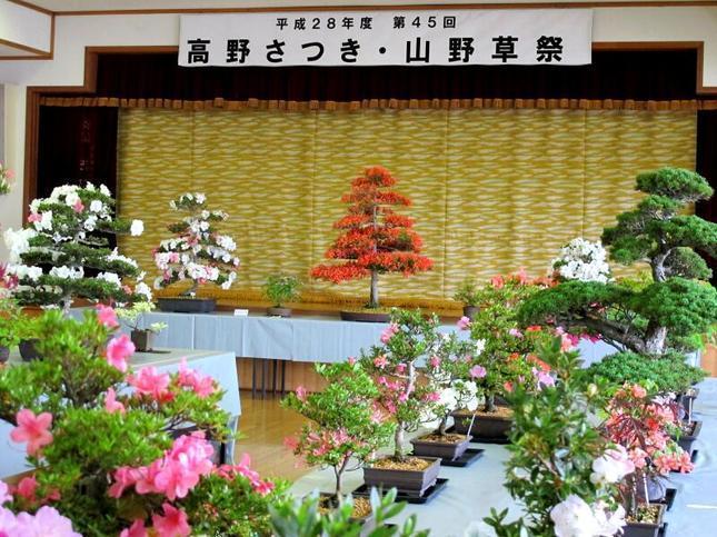takano_satsuk12.jpg