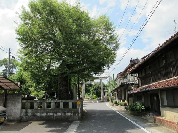 中山神社祝木のケヤキ 市指定天然記念物