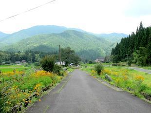 osonosakura11.jpg