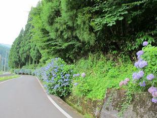 osonosakura4.jpg