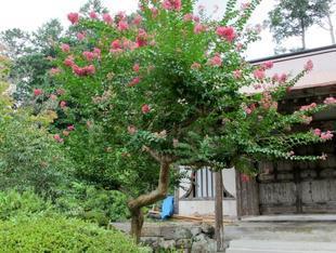 honkouji8-15-11.jpg